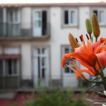 Services of Dear Porto Guest House
